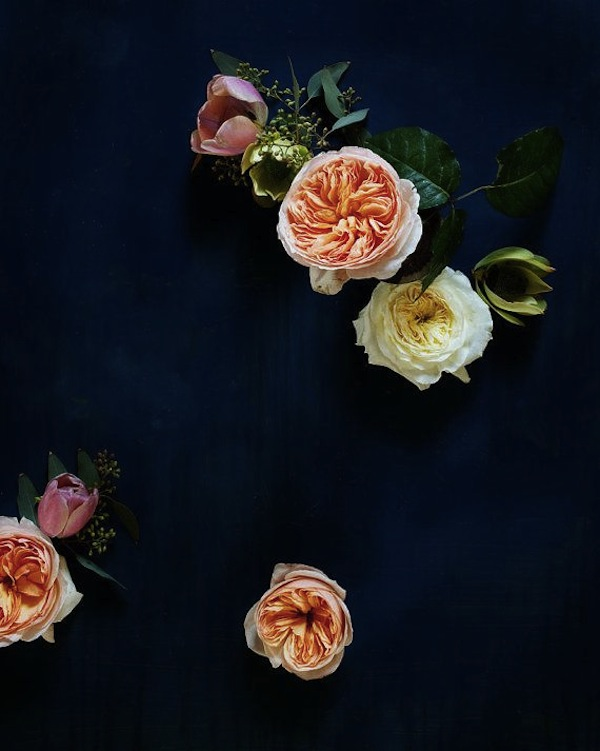 AphroChic: Kari Herer's Elegant Floral Portraits